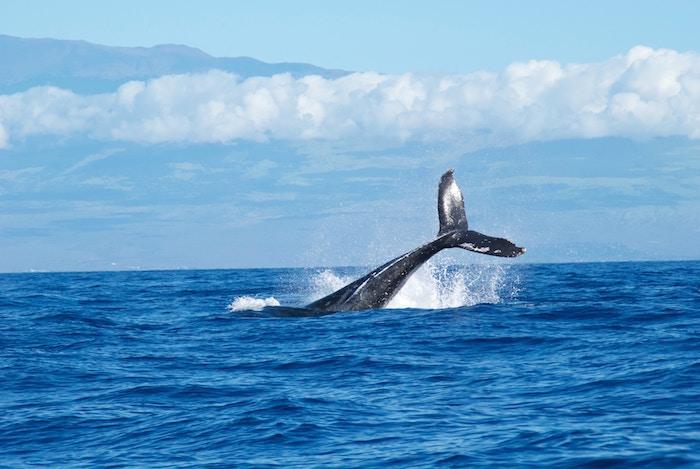 クジラの半球睡眠